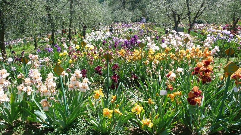 Iris Garden Florence