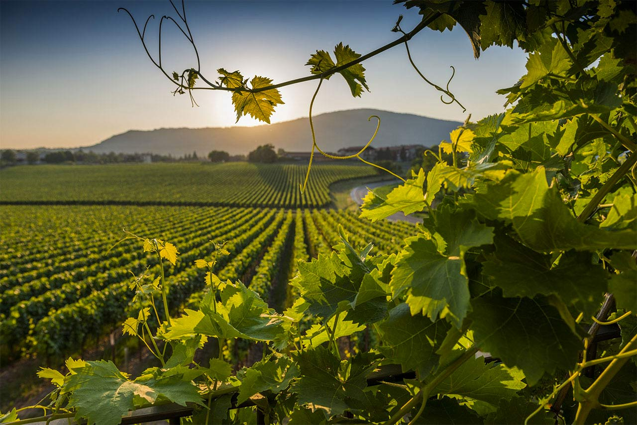 online store 0b108 18539 La Toscana e il Vino - Alberghi in toscana - Hotel Il Guelfo Bianco Firenze